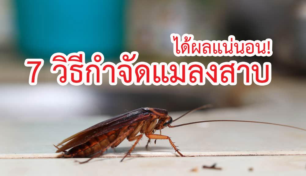 วิธีกำจัดแมลงสาบ ได้ผลชะงัก ยืนยันเลย